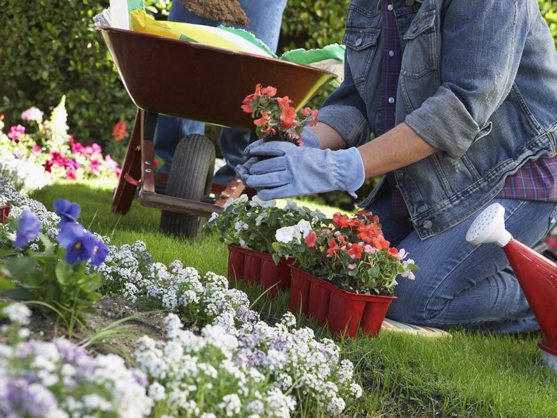 Что за цветы сажают в парках 336