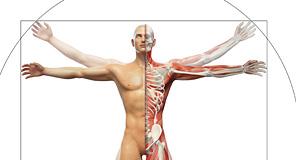 プロフェッショナルな人体図・解剖図;