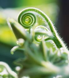 【Green & Flower】造形やたたずまいの美しさに注目したボタニカルイメージ