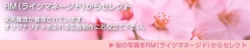 RM(ライツマネージド)からセレクト 使用履歴が管理されています。オリジナリティあふれる広告制作にお役立て下さい。 桜の写真をRM(ライツマネージド)からセレクト