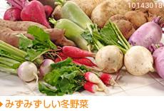 みずみずしい冬野菜