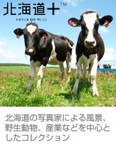 『北海道+』北海道の写真家による風景、野生動物、産業などを中心としたコレクション