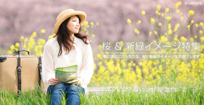 『 桜 & 新緑イメージ特集 』 春の演出にぴったりな、桜と新緑のイメージをお届けします。