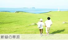 新緑の草原