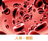 人体・細胞