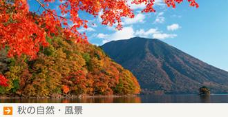 秋の自然・風景