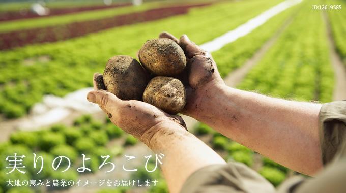 『 実りのよろこび 』 ~ 大地の恵みと農業のイメージをお届けします
