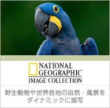 【National Geographic】野生動物や世界各地の自然・風景をダイナミックに描写