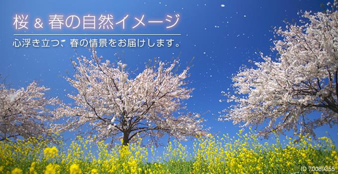 桜&春の自然イメージ