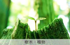 樹木・植物