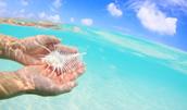 10127048(晴れた日の海で貝を持つ手)とその連想画像