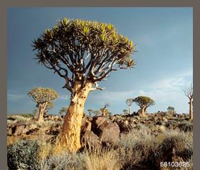 58103625(ナミビアの風景)