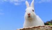 50075301(ウサギ)とその連想画像