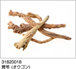 31820018:黄苓 (オウゴン)