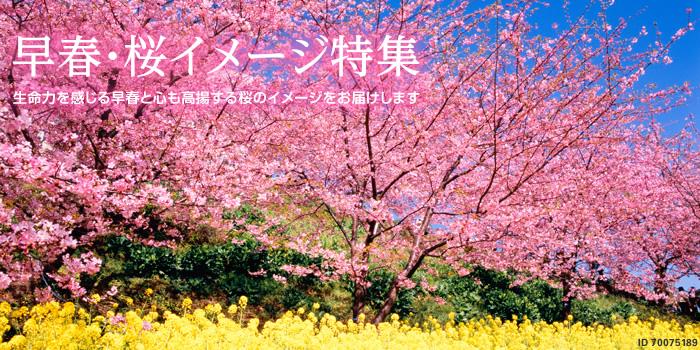 早春・桜のイメージ特集