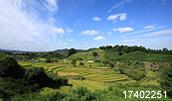 17402251(棚田の風景)とその連想画像