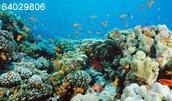 64029806(サンゴ礁と色鮮やかな魚たち)とその連想画像