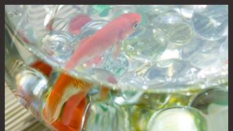 14904205(金魚)