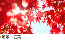 風景・紅葉