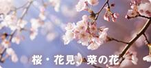 桜、花見、菜の花