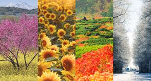 〈imagenavi CREATOR RF〉日本の自然特集;